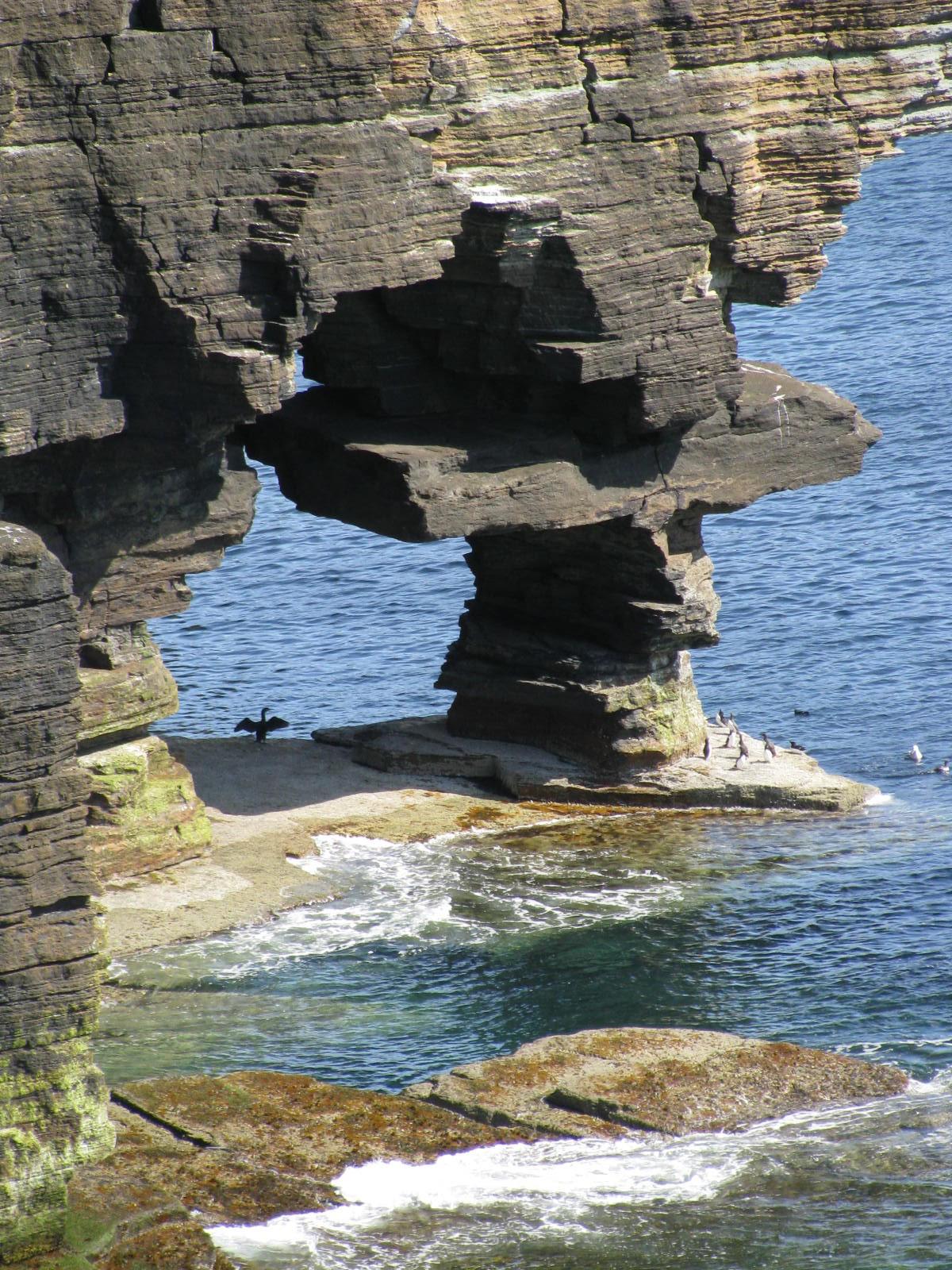 Een aasgolver met open gesperde vleugels onder een rotsark