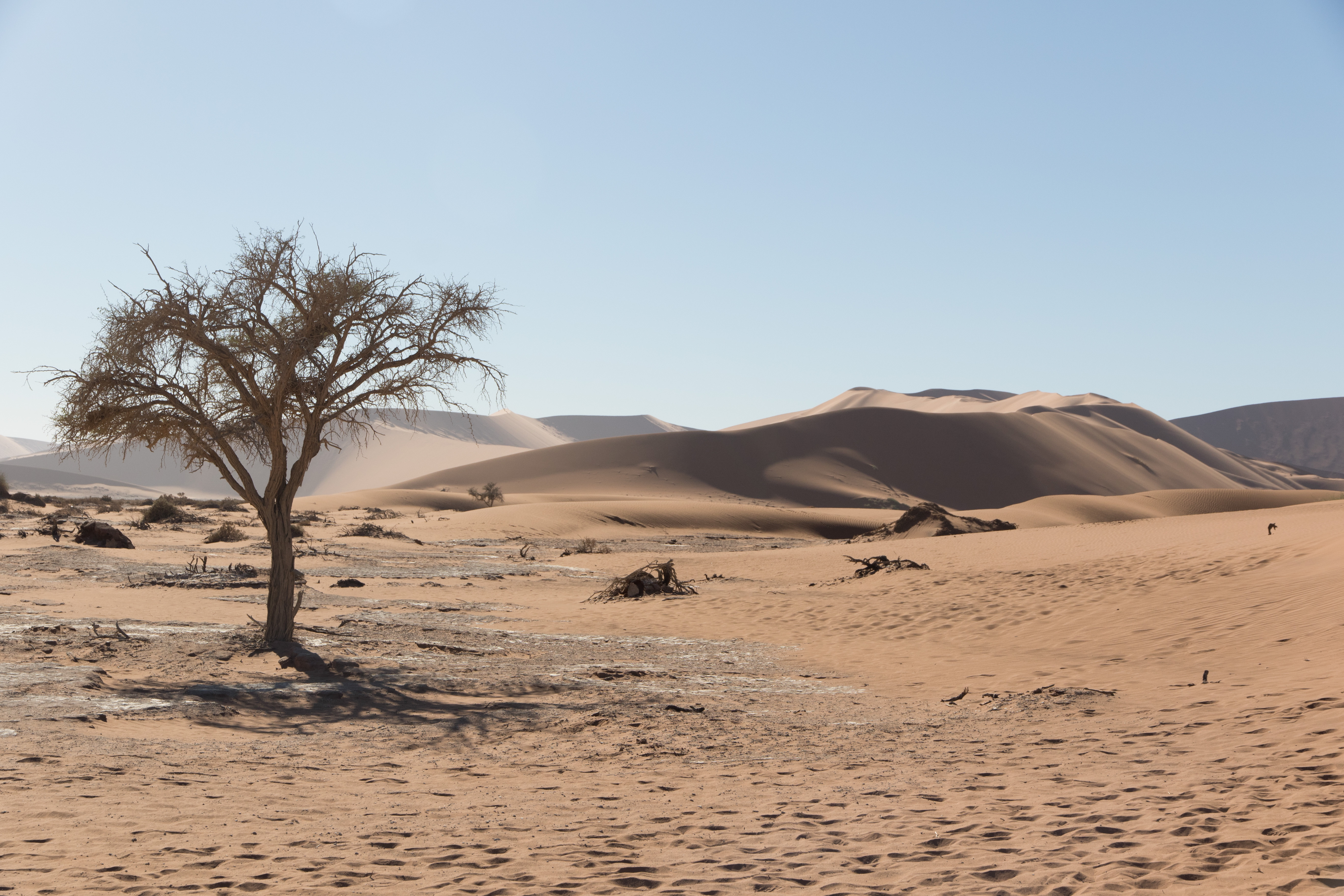 De bomen van Sossuvlei zijn niet allemaal zo mooi en groen