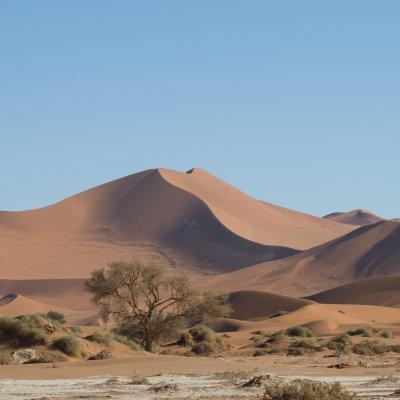 Voorvertoning De rode duinen