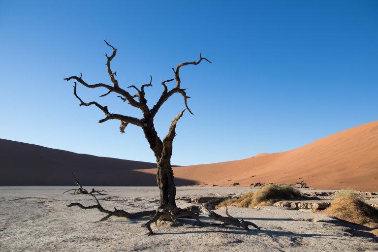 Deadvlei waar de bomen dood en verdroogt zijn