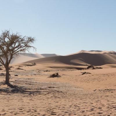 Voorvertoning De bomen van Sossuvlei zijn niet allemaal zo mooi en groen