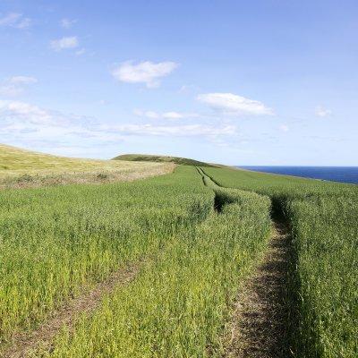 Voorvertoning Het pad naar Troop Head met wuivend gras. De 'bult' aan het einde hoort bij Troop Head.