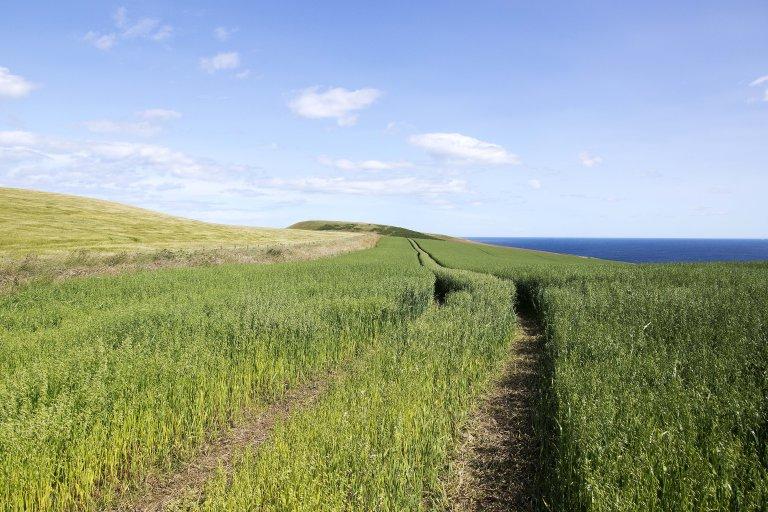 Het pad naar Troop Head met wuivend gras. De 'bult' aan het einde hoort bij Troop Head.