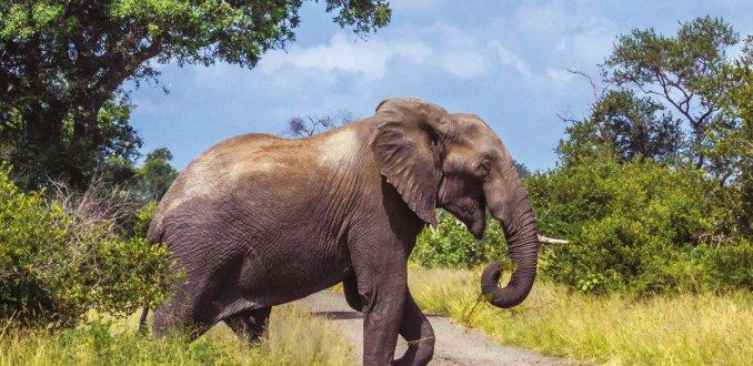 Ga van de gebaande paden in oostelijk Zuid-Afrika