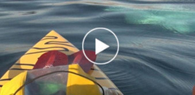 Walvis verrast peddelaars