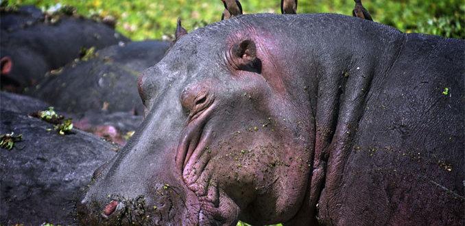 4 dieren die je moet zien voordat ze uitsterven