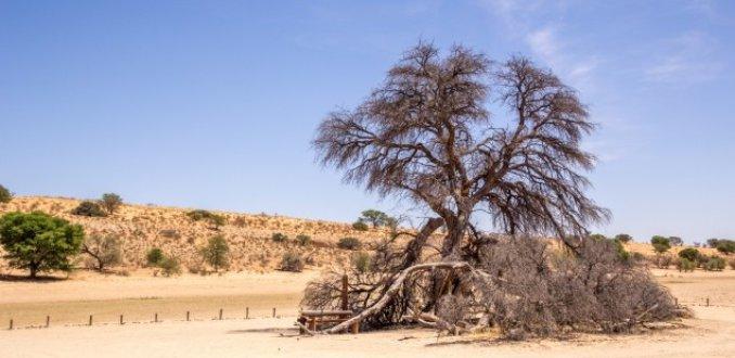 Blog van de week: Crossen in de Kalahari