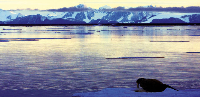 ##7x doen Spitsbergen