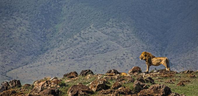 Total guide: 5x op safari buiten de gebaande paden