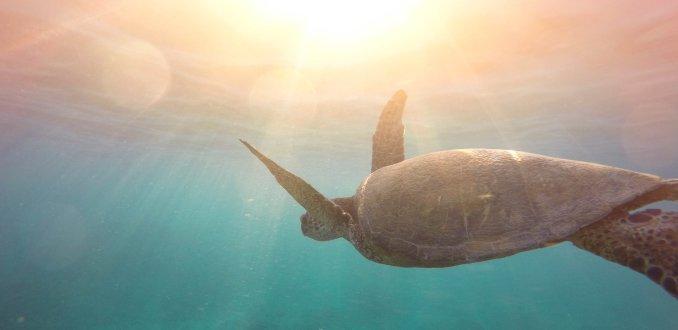 De 5 móóiste plekken om zeeschildpadden te zien