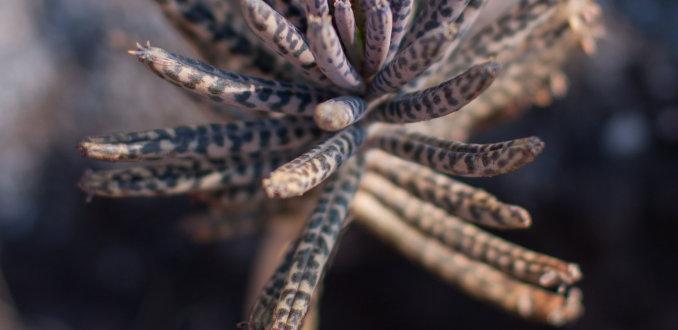 Plantje bij Graskop