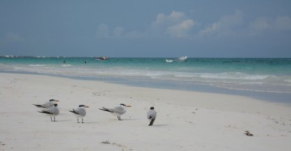 Birds @ The Beach