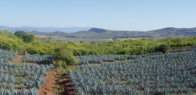 Tequila industrie