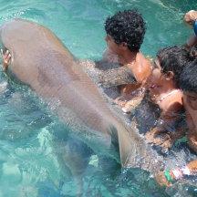 Haaien aaien in Mexico