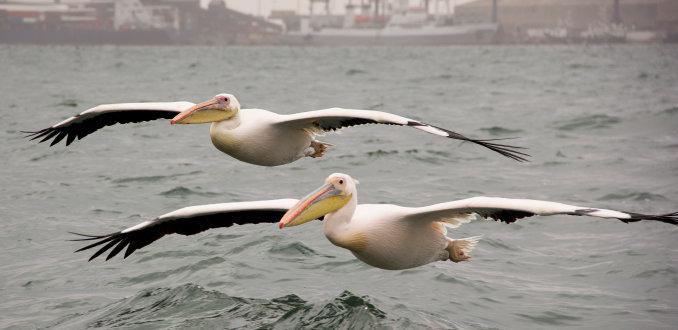 Duo vlucht