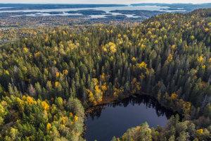 Wandelen in de bossen van Oslo