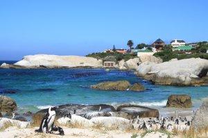Snorkelen tussen de pinguïns