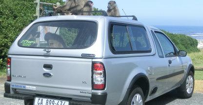 Baboon apen