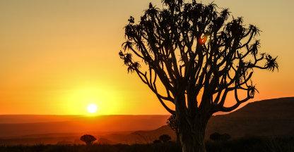 Zonsondergang tussen de kokerbomen