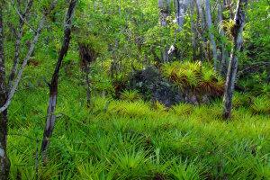 Curaçaose jungletocht