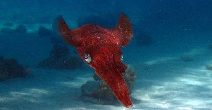 UFO onder water