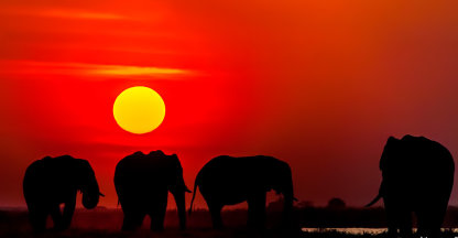 Olifant Silhouette
