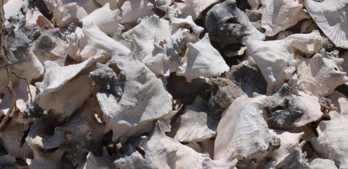 bergen karko schelpen