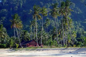 paradijs onder de palmbomen