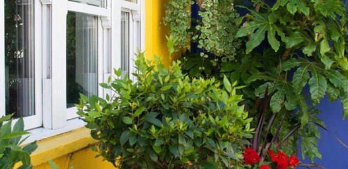 Plantenhoekje in St. Anne