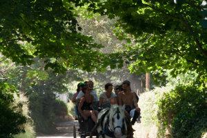 Openbaar vervoer op Sark