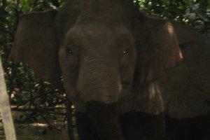 Olifanten op 10m afstand!