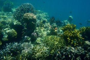 Sprookjesbos onderwater Tun Sakaran