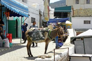In Moulay Idriss