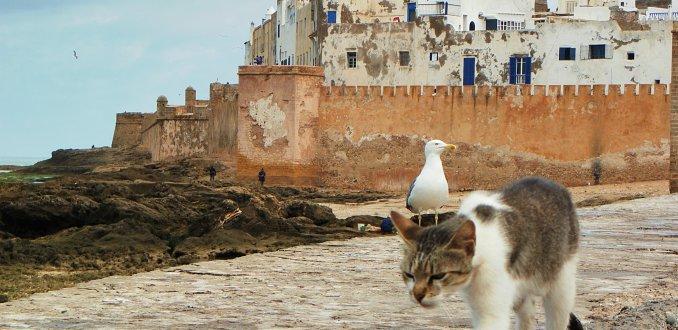 Zicht op Essaouira