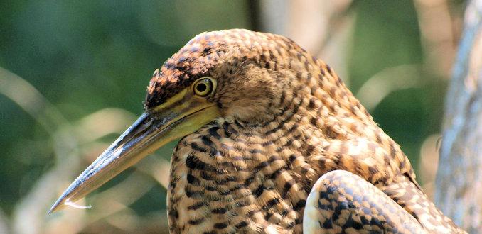 Vogel in Celestun national park