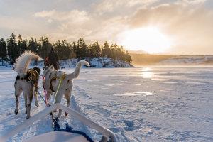Op de slee, achter de huskies, op 3 uur van Oslo