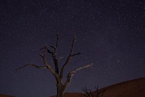 'Camel Thorn Tree' met Sterrenhemel in Dead Vlei