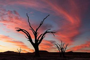 Mooie zonsondergang met 'Camel Thorn Trees' in Dead Vlei