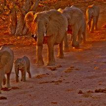 Koppeling openen gouden olifanten