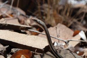 Slang in Namibie