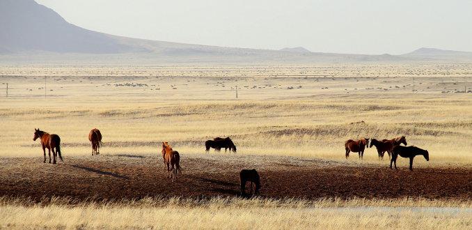 Wild horses(film)