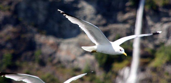 Tijdens een boottocht over de fjorden