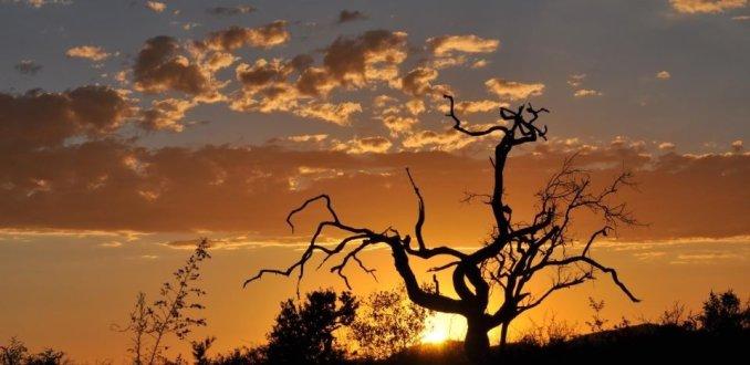 De zon verlaat de savanne.