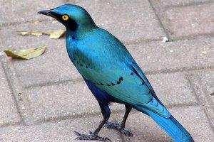 vogel (helemaal openen)