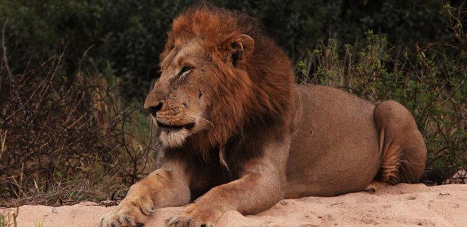 De king II