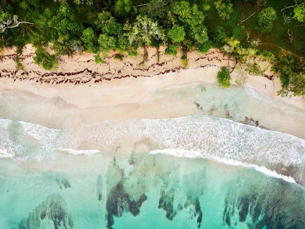 Wit poederzand, palmbomen tot aan de zee en jungle in de achtertuin. Isla Bastimentos, Bocas del Toro, Panama