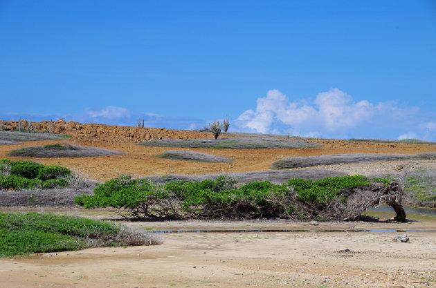 De langste boom van Bonaire