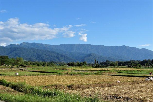 Rijstvelden in de bergen.
