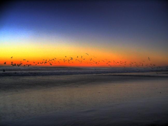 Zonsondergang met vogels