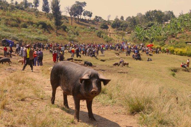 veemarkt in Kibuye